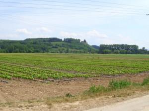 DSCI0360-Burg-Lichteneck2-kl